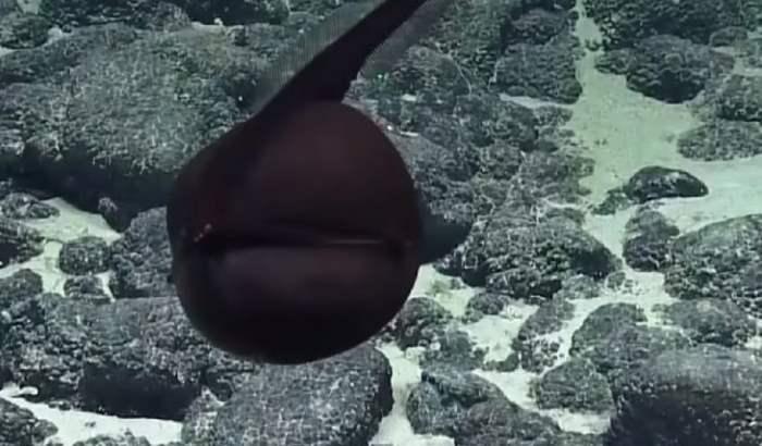 рыба рот