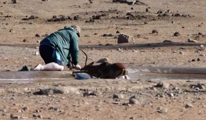 турист и антилопа