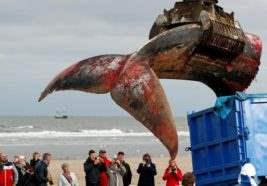 Хвост мертвого кита