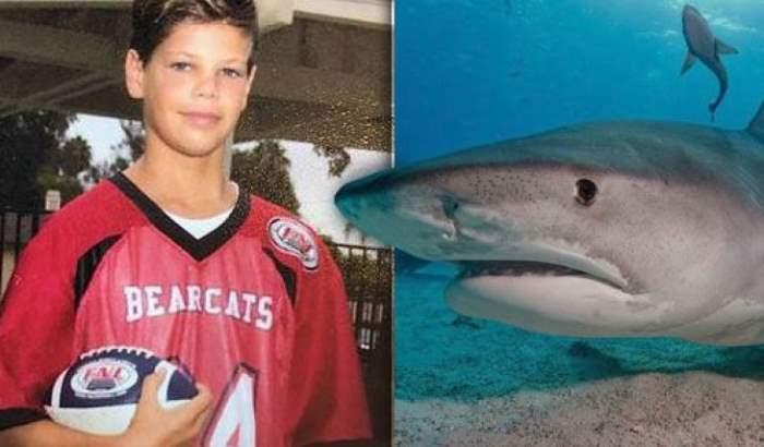 акула нападение
