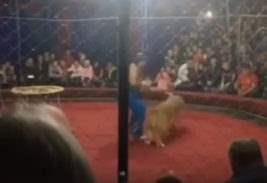 нападение львицы