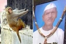 обезьяны индия