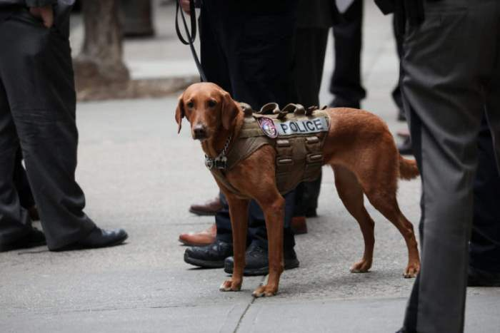 собака полиция