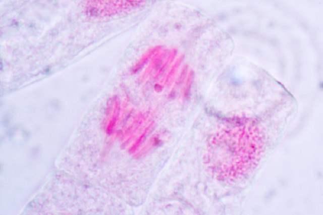 структура в клетках