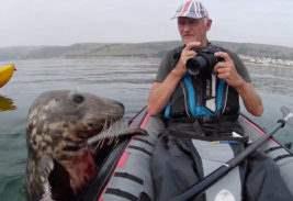 тюлень байдарка
