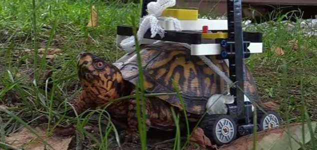черепаха кресло