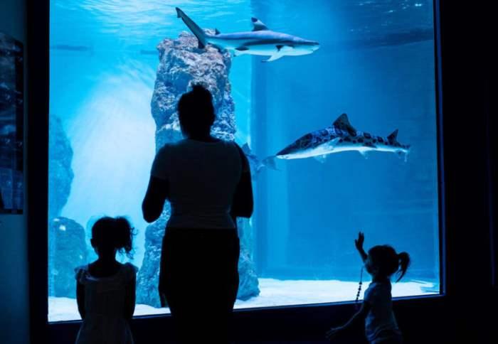 В аквариуме в Пуле