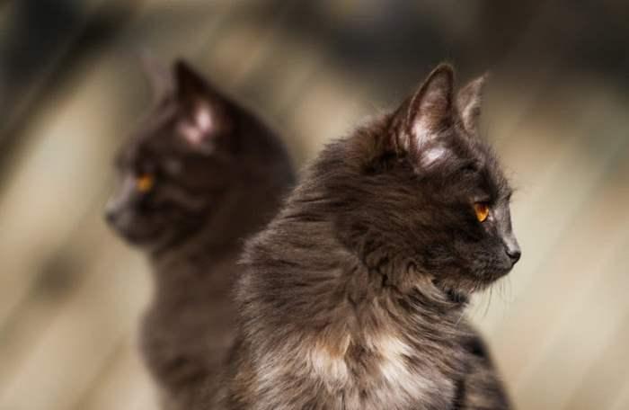 Кошки в парке Горки