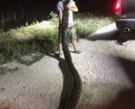 Охотник на змей