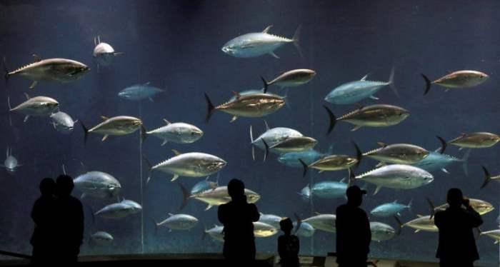 Посетители Токийского морского парка