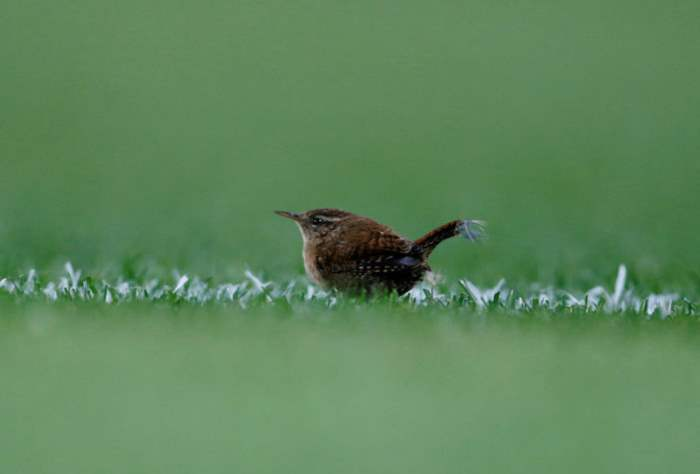 Птица на поле