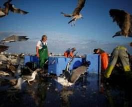Рыбаки на работе