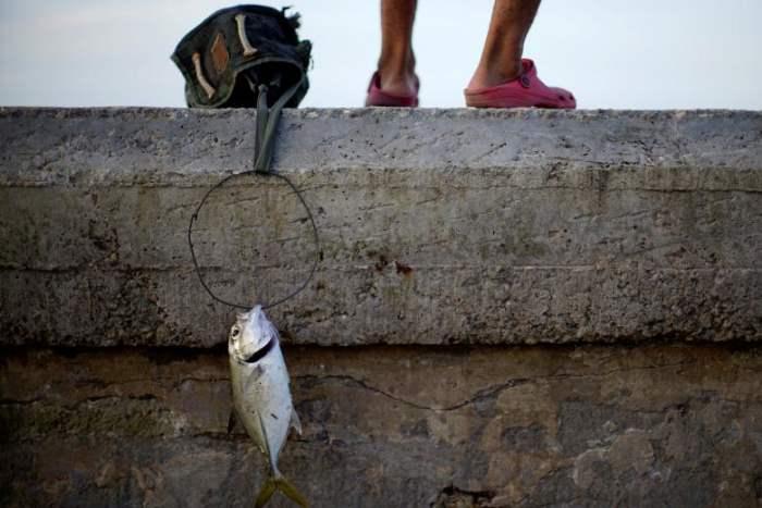 Рыба висит