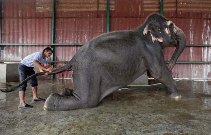 Сотрудник Центра ухода за слонами