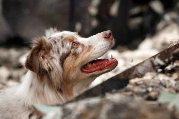 Специально обученная собака