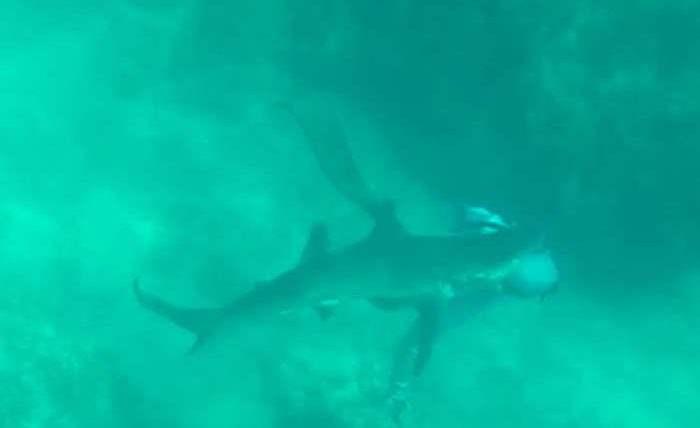 акула укусила