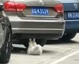 кот качает пресс