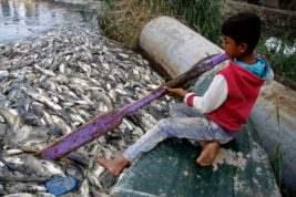 мертвая рыба