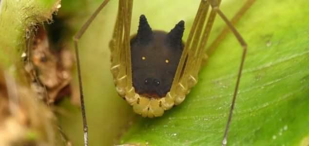 паук собака