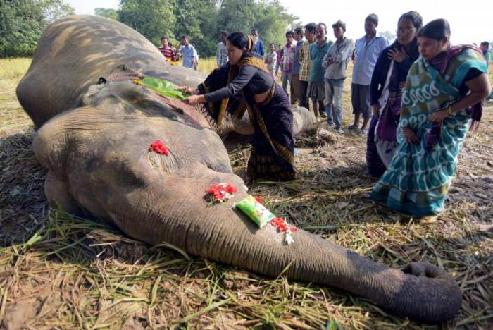 убитый-слон