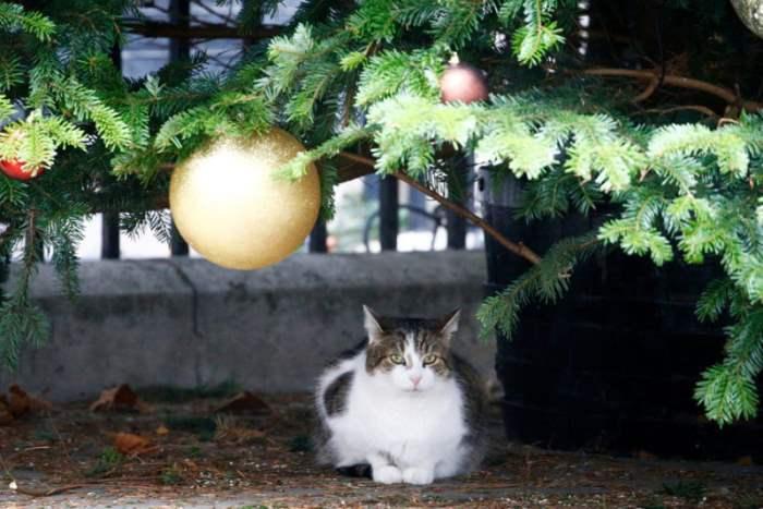 Кот сидит под елкой