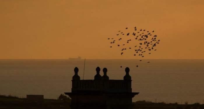 Птицы летят над островом Гозо, Мальта.