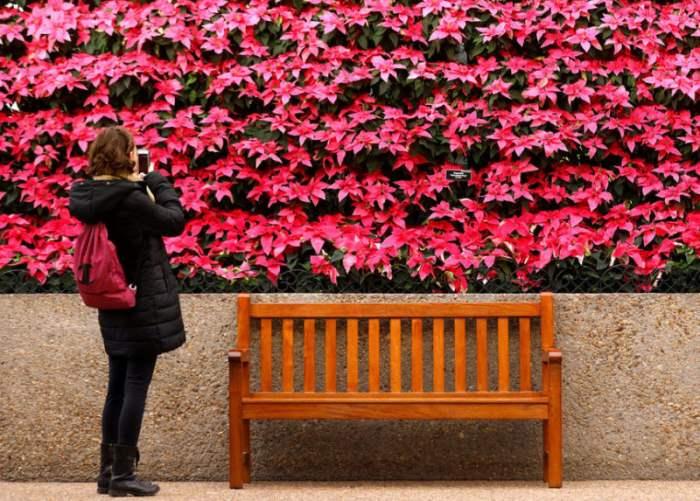 Фото из Ботанического сада США в Вашингтоне.