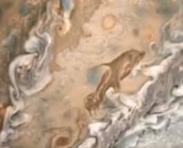 дельфин Юпитер