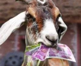 коза и деньги