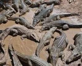 крокодилы телефон