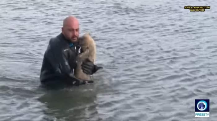 спас собаку