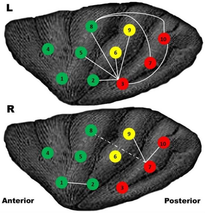 мозг геймера
