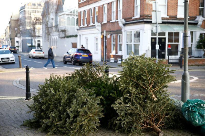 Не проданные рождественские елки