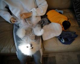 Одежда для прогулок для домашних животных