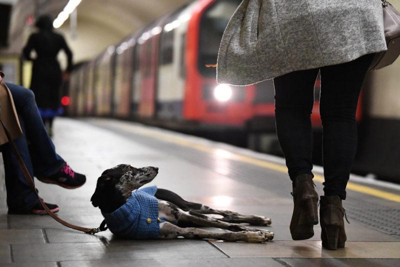 Собака и владелец