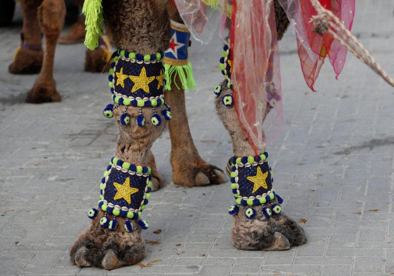 Украшенный верблюд