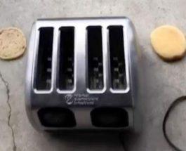 змея в тостере