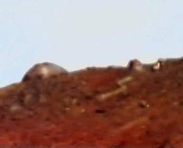 купол марс
