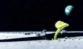 растение на луне
