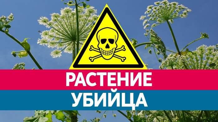 растение убийца