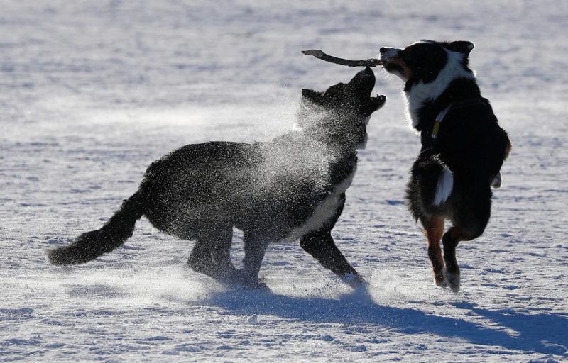 собаки наслаждаются снежной зимой