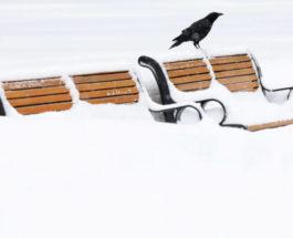 Зимний шторм в Оттаве