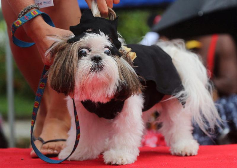 И собаки готовы к карнавалу в Рио.