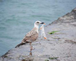 Птицы и пластик