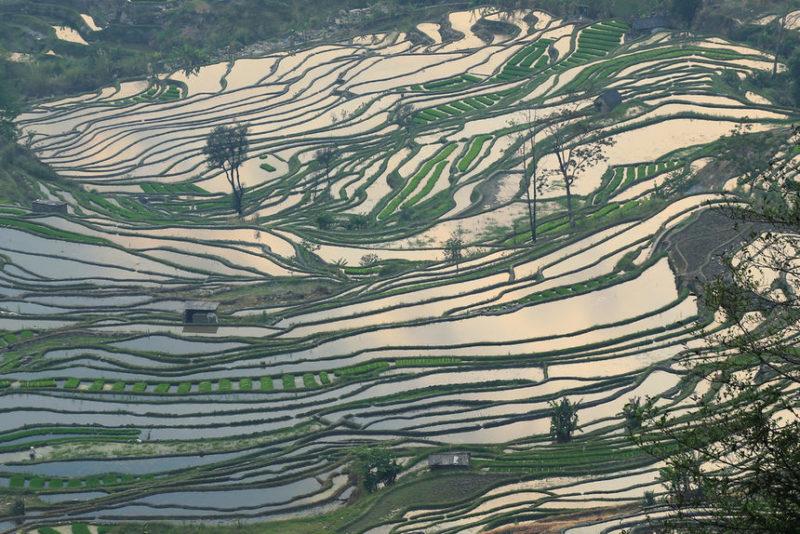 Террасные рисовые поля