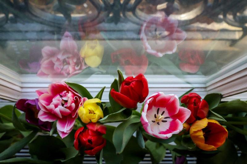 Цветы в резиденции посла Нидерландов