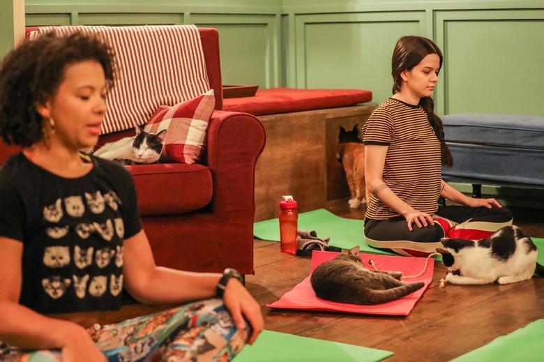 на уроке йоги с кошками
