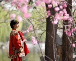 В Пекине наслаждаются цветущей вишней.