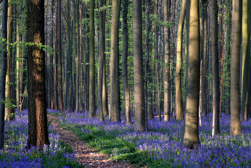 Ландшафт так называемого голубого леса
