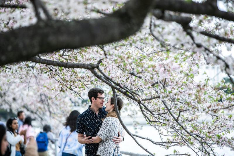 Люди наслаждаются цветущей вишней